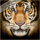 Dark Burner Premium - Black Tiger 10ml
